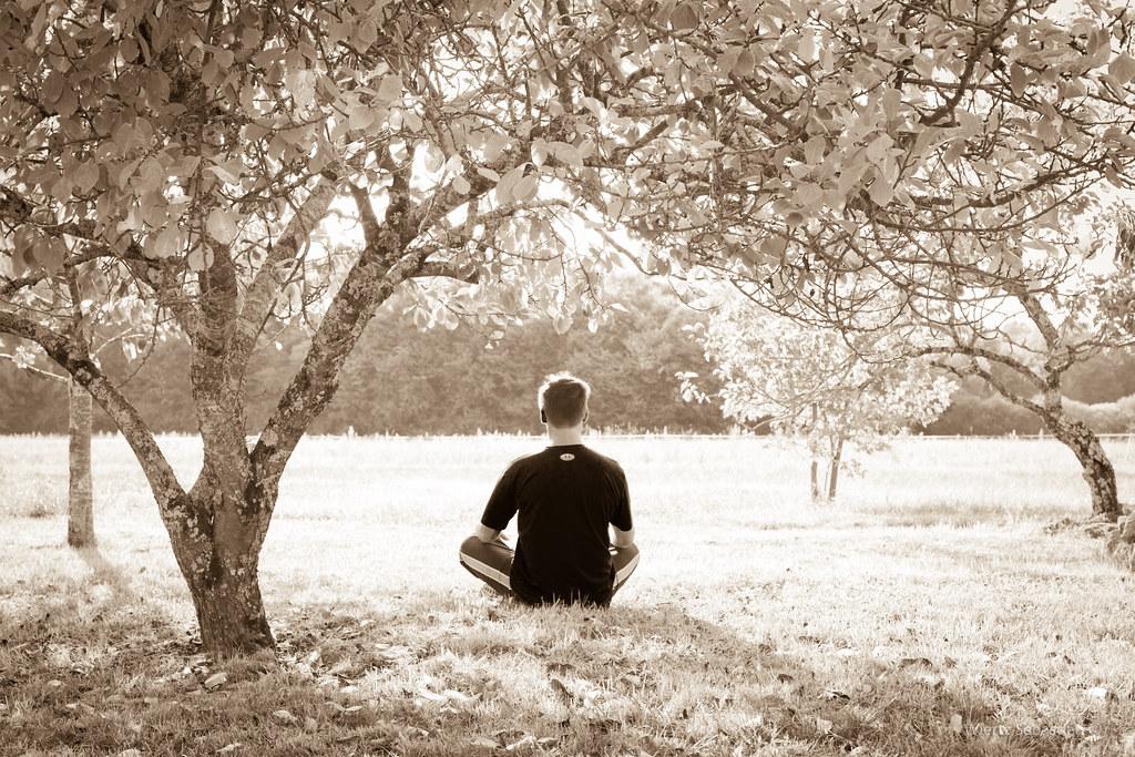 comer, dormir, meditar